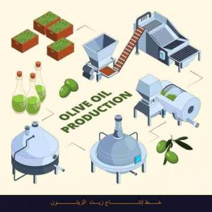 Olive Oil Extraction Olive Press and Bottling Line LionMak Top Quality 250kg to 5 Ton per Hour
